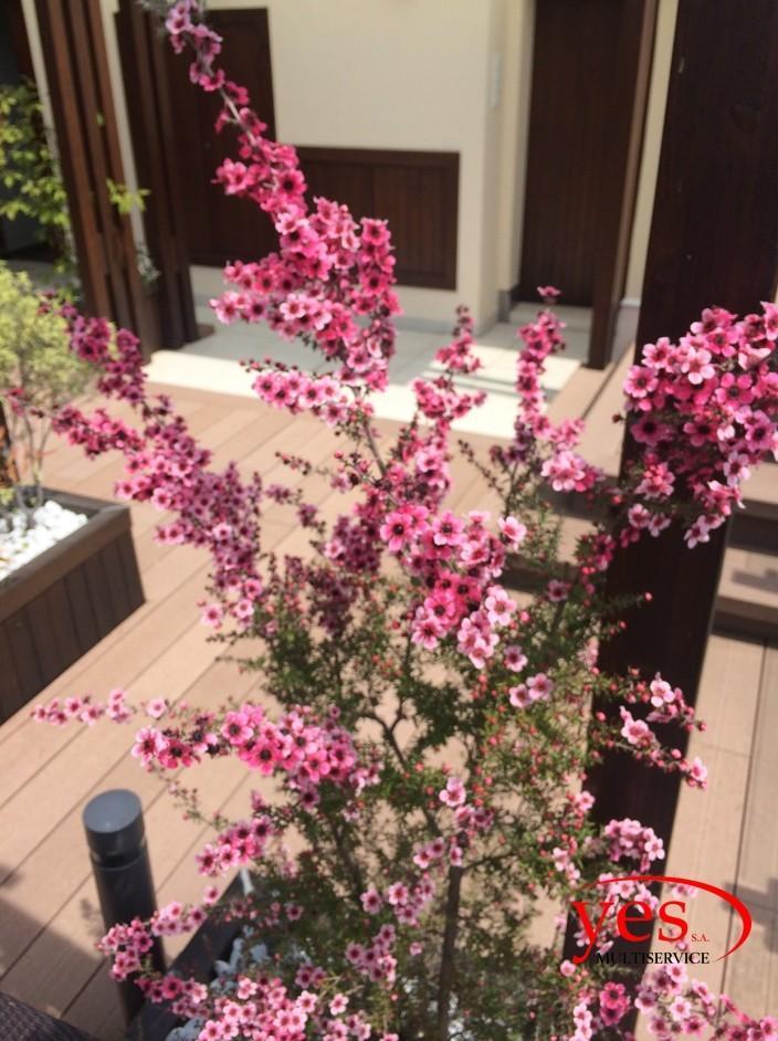 Creazione giardino su terrazza – Lugano 2014